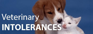 Veterinary intolerances for dogs and cats
